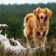 Frisk sunn hund i natur