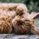 katt som slapper av